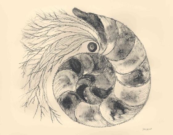 Nautilus, lithografie, 37 × 37 cm, oplage 9
