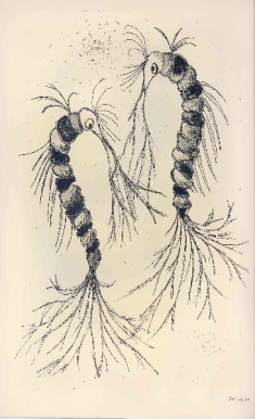 Zeewezens, lithografie,28×38 cm, oplage 9